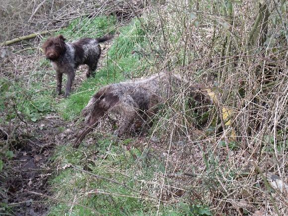 Accueil - Elevage des marais du buet - eleveur de chiens