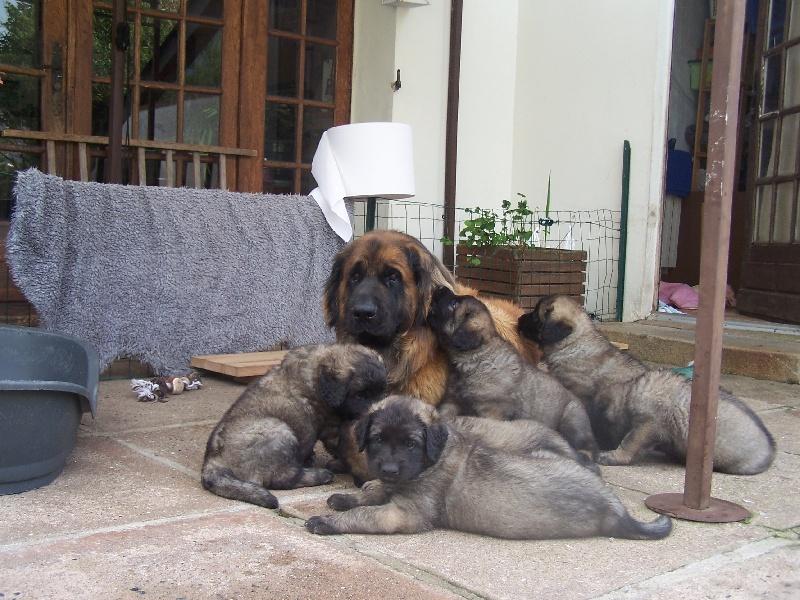 rencontre chien adulte chiot plan de cu
