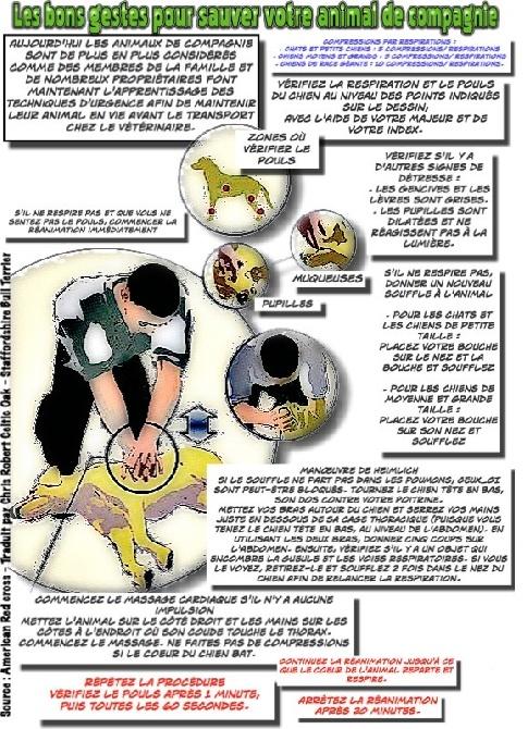 of Celtic Oak - Les bons gestes qui peuvent sauver votre animal ;)