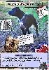 - Sortie du 1er magazine spécialisé Staffordshire Bull Terrier