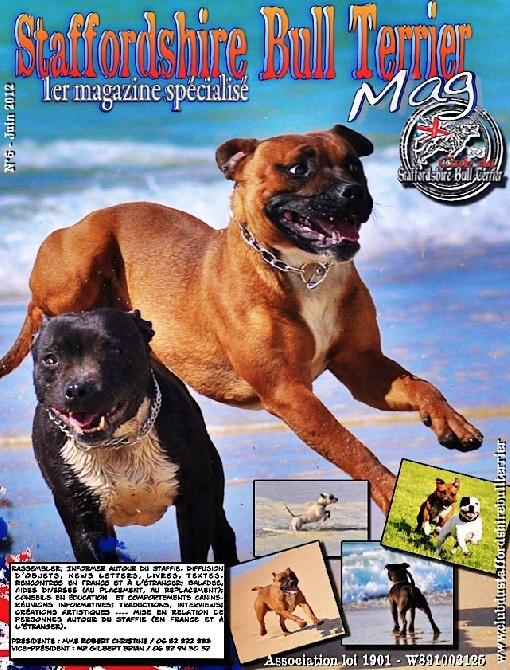 of Celtic Oak - Sortie 1er Magazine spécialisé Staffordhsire Bull Terrier - N°6