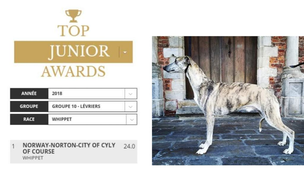 of Cyly of Course - Norway Norton City Meilleur jeune whippet de France
