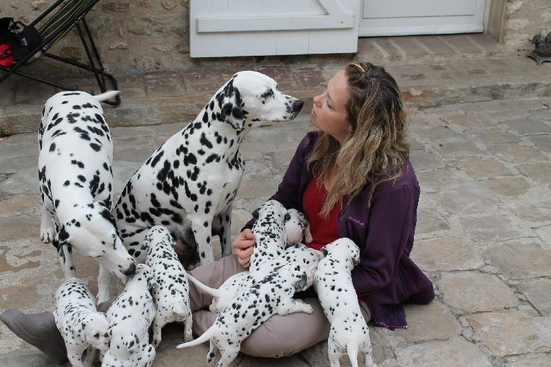 Liza's Dream - Dalmatien - Portée née le 23/08/2013
