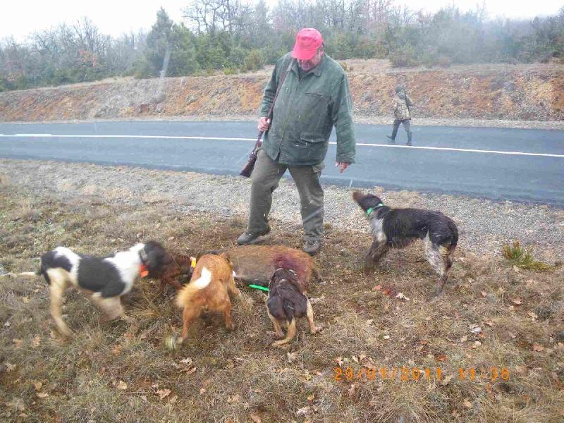La chasse aux chiens courants