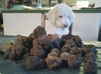 Accueil - Elevage du Cap de Serre - eleveur de chiens