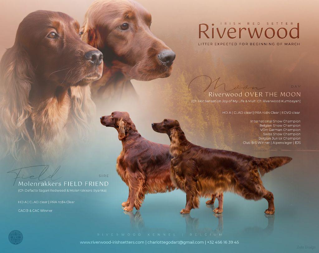 Riverwood - Bientôt des chiots