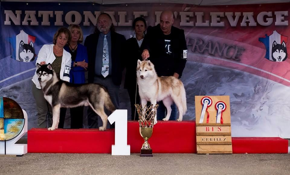 Bloodsnow - National d'élevage 2017 Dolly BEST IN SHOW !!!