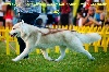 - Dolly  TOP Siberian Husky France 2016 !!!!