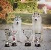 - Trest Dog Show