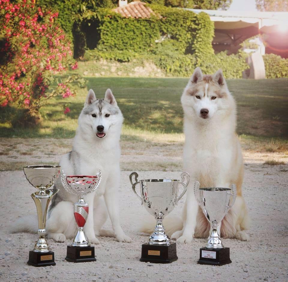 Bloodsnow - Trest Dog Show
