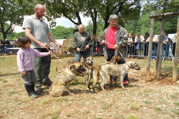 Photo elevage de las sesteriades eleveur de chiens u - Salon de la chasse saint gely du fesc ...