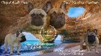 Bouledogue français - de la vallée Dioise