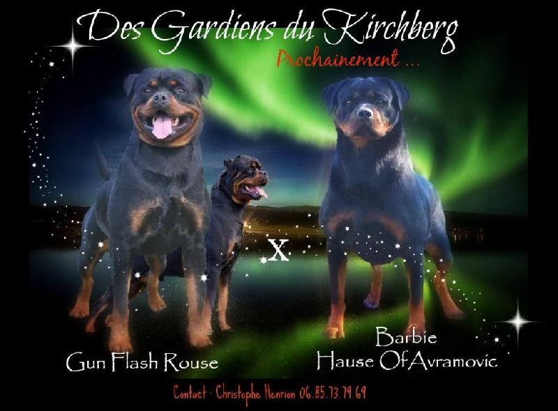des gardiens du kirchberg - Rottweiler - Portée née le 14/01/2016