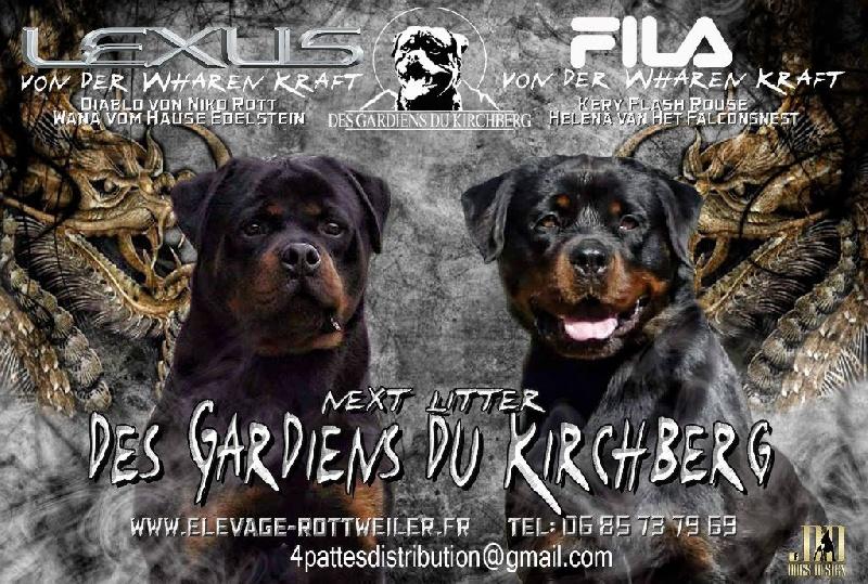 des gardiens du kirchberg - Rottweiler - Portée née le 27/09/2016