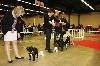 - PARIS DOG SHOW  SPECIALE DE RACE