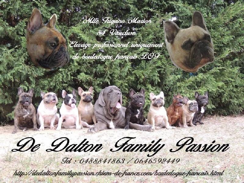 de Dalton Family Passion -