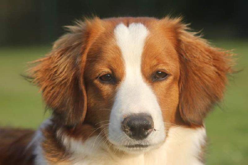 manusia's Emma-wieke dite gwenola chien de race toutes