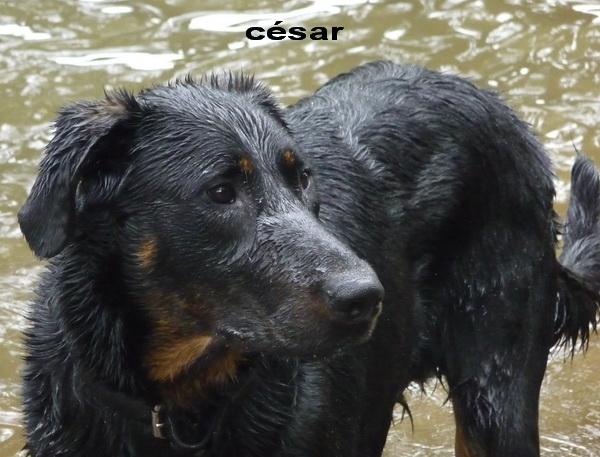 César des gardiens aux coeurs tendres