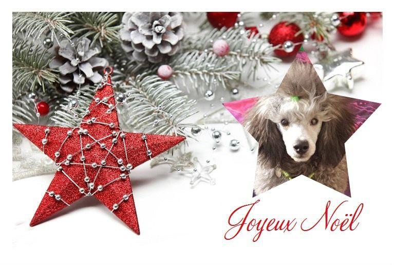 des Cheycken's Grey De Clea - Joyeuses fêtes  de Noël.....