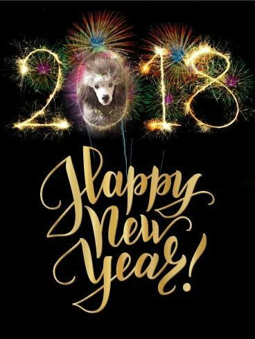 des Cheycken's Grey De Clea - Happy New Year 2018.....
