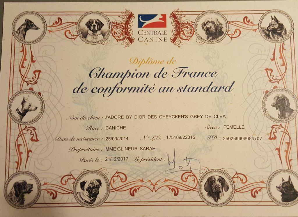 des Cheycken's Grey De Clea - Diplôme Ch.de France