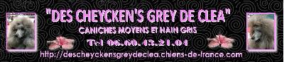 des Cheycken's Grey De Clea