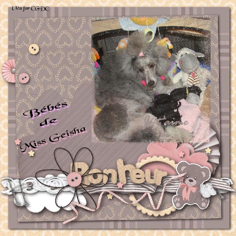 des Cheycken's Grey De Clea - Caniche - Portée née le 25/03/2014
