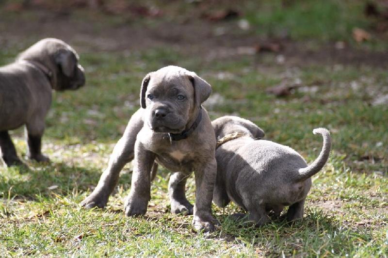 imdb parents guide a dog& 39