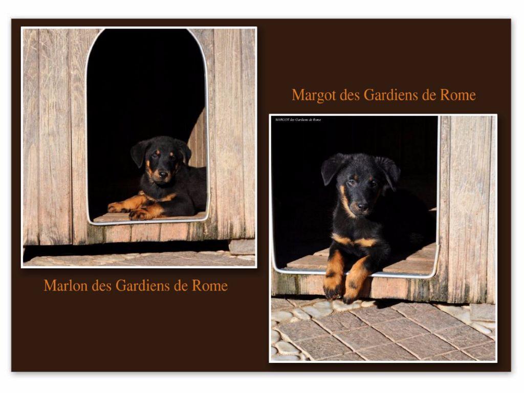 Des Gardiens De Rome - MARGOT ET MARLON DES GARDIENS DE ROME