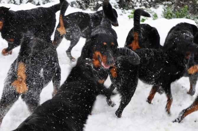 Des Gardiens De Rome - Notre élevage sous la neige
