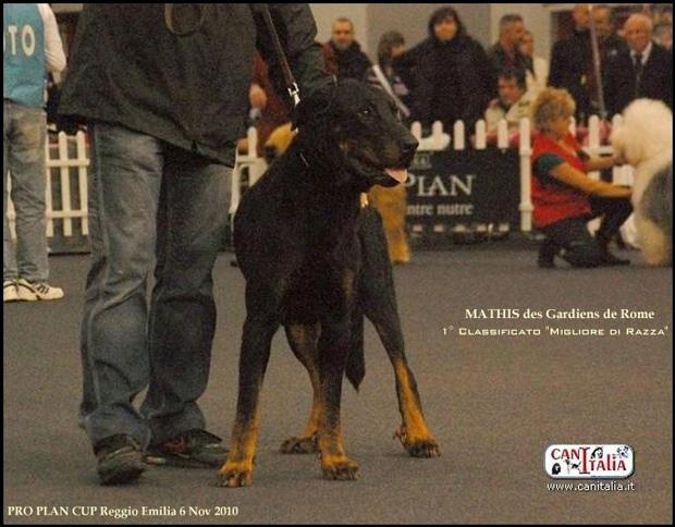 CH. Mathis Des Gardiens De Rome