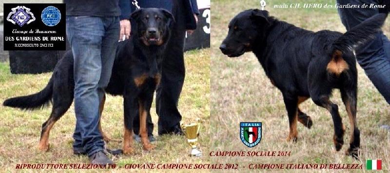 CH. Hero Des Gardiens De Rome