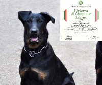 CH. Iara Des Gardiens De Rome