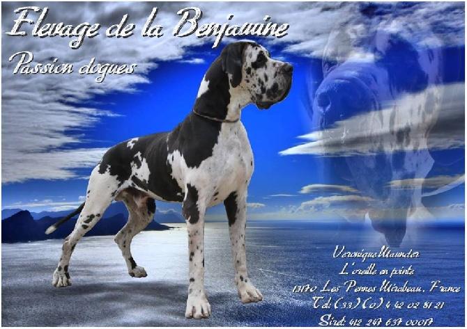 Accueil - Elevage de la Benjamine - eleveur de chiens