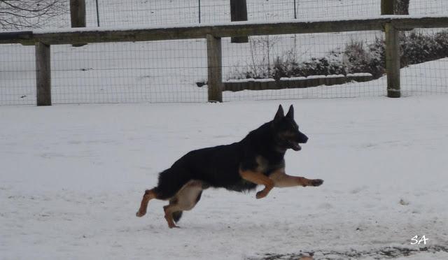 dressage chien grez sur loing