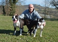 American Staffordshire Terrier - of Woodcastle's Dogs