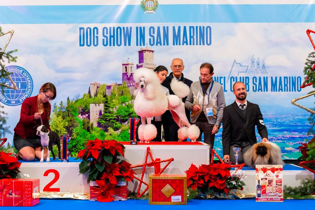 Sweeties Doggies - SAN MARINO  vendredi 6 décembre 2019