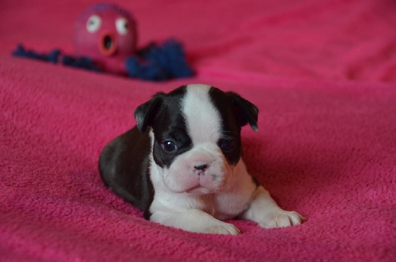 Publication : Sweeties Doggies  Auteur : SWEETIES DOGGIES
