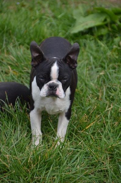 CH. Libertine Sweeties Doggies