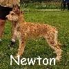 - Newton de l Abbaye des sources bleues