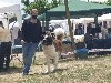 - XXIV Dog Show International ODENA