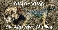 CH. Aiga Viva Fé libre
