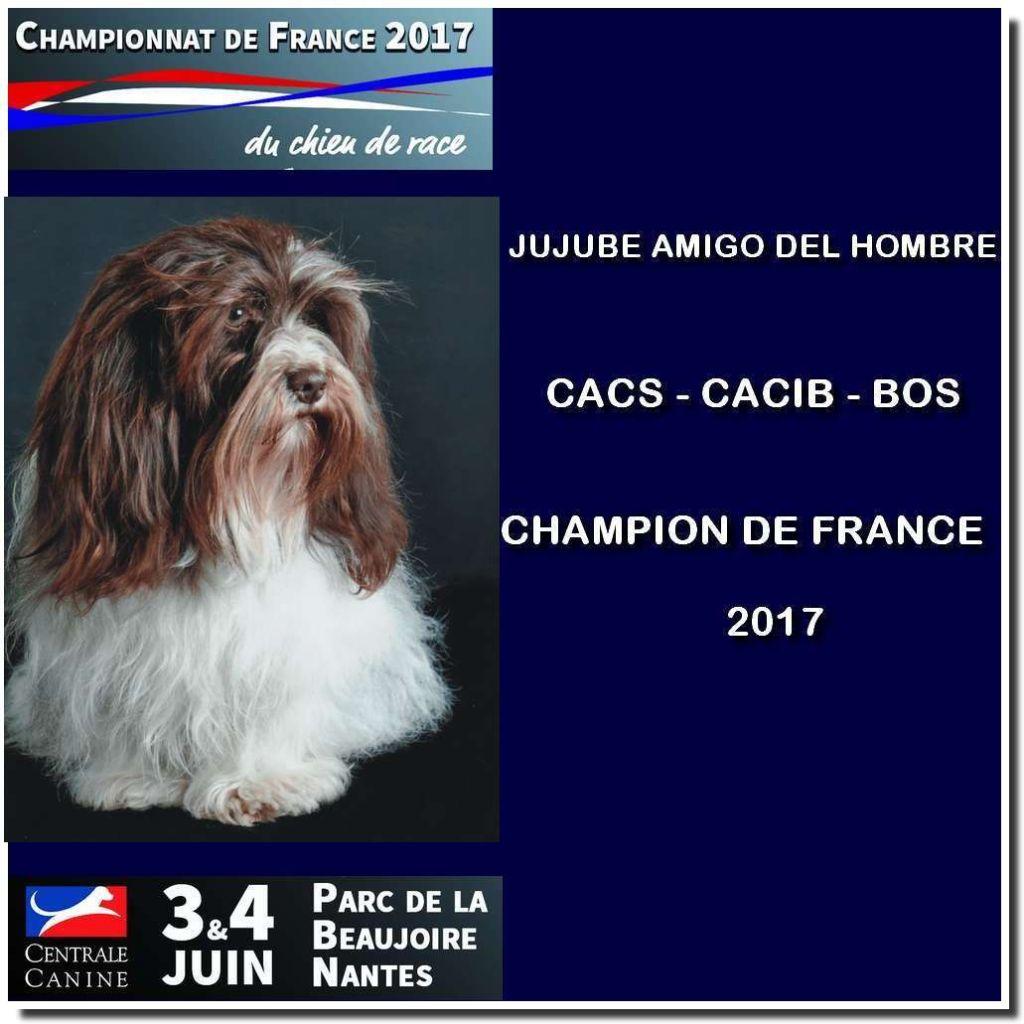 Amigo Del Hombre - CHAMPIONNAT DE FRANCE 2017