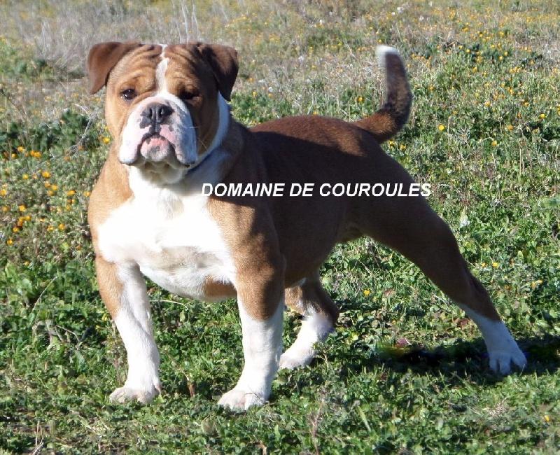 Publication : du domaine de Couroules  Auteur : Rosy: Domaine de Couroules