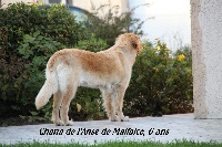 CH. Chana de l'Anse de Malfalco