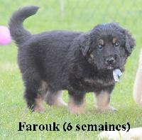Farouk des Jardins de la Damoiselle