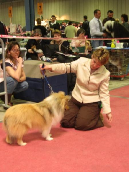 Luxembourg International Dog Show