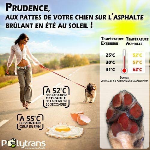 Du Domaine De La Sarronnaise - PRUDENCE