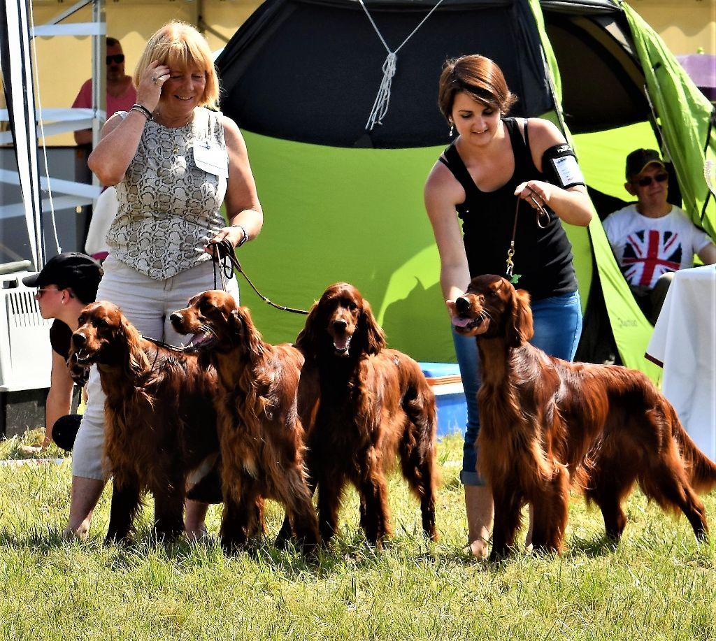 De L'anneau Du Kerry - TOP DOG AWARDS