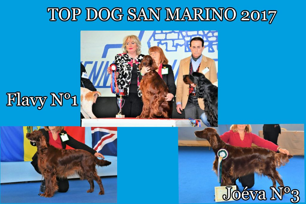 De L'anneau Du Kerry - TOP DOG SAN MARINO